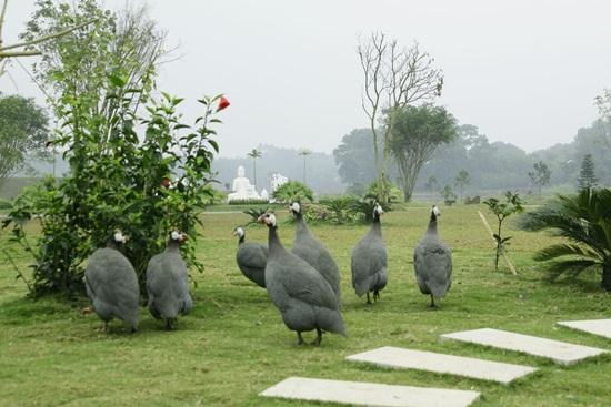Cảnh vật yên bình tại công viên nghĩa trang