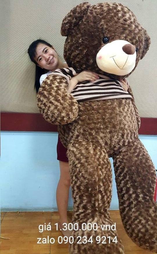 gấu bông teddy choco khổng lồ