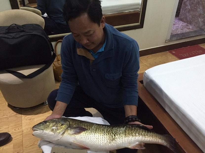 cá sủ vàng bị bắt