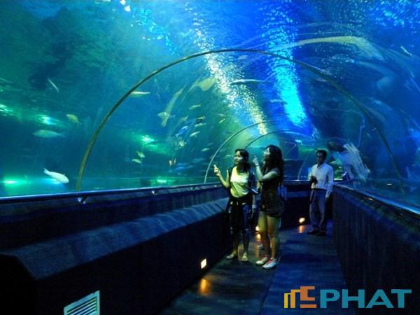 Bể cá Chung cư Times City