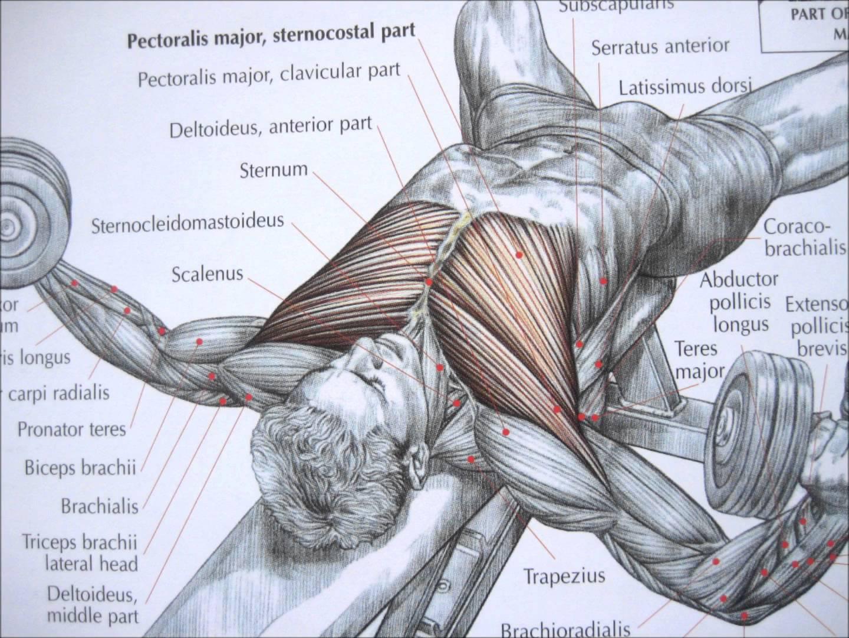 bài tập ngực với  tạ tay