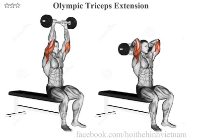 Olympic Triceps Extension
