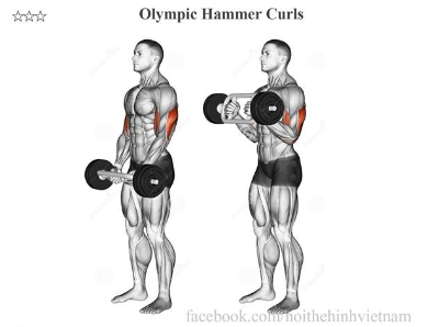 Olympic Hammer Curls