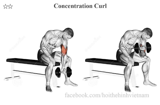 Concentration Curl