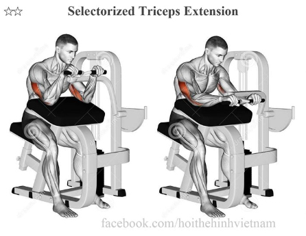 Selectorized Triceps Extension