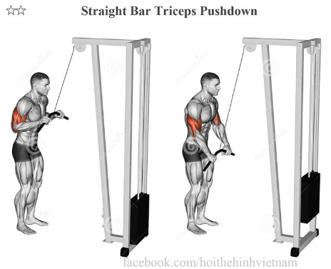 Straight Bar Triceps Pushdown