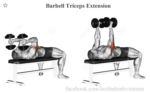 Barbell Triceps Extension
