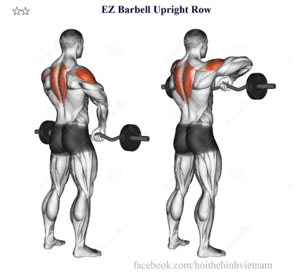 EZ Barbell Upright Row