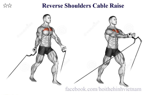 Reverse Shoulders Cable Raise