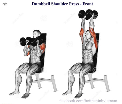 Dumbbell Shoulder Press - Front