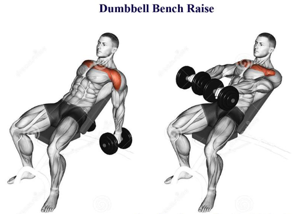 Dumbbell Bench Raise