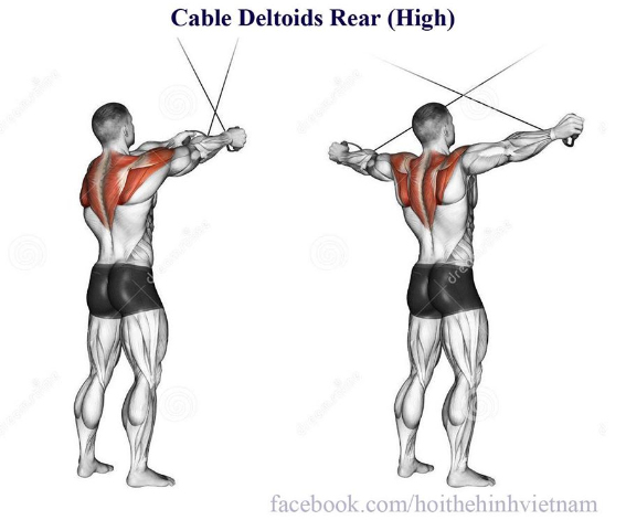 Cable Deltoids Rear