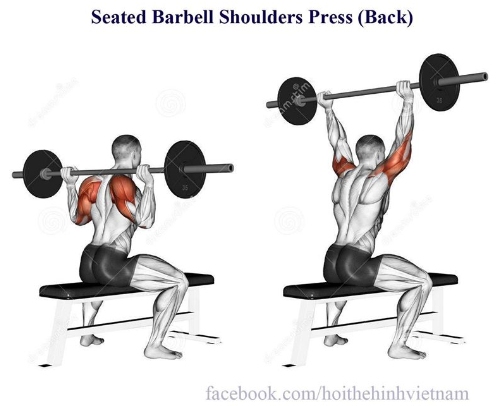 Seated Barbell Shoulders Press