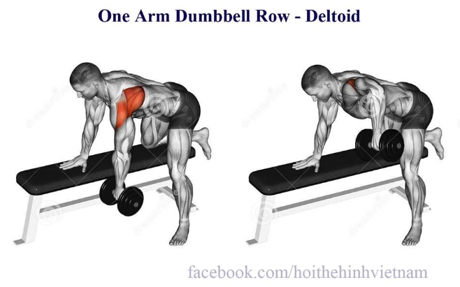 One Arm Dumbbell Row