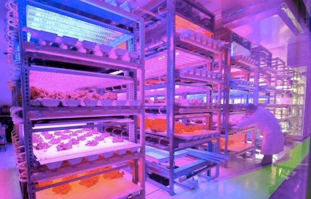 đèn led có nhiều ứng dụng trong nông nghiệp
