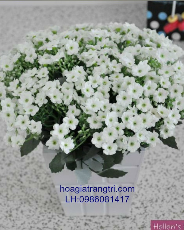 Mua hoa lụa cao cấp tại Hà Nội chất lượng hàng đầu