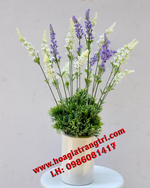 Hoa violet tím và trắng cho cô nàng bánh bèo