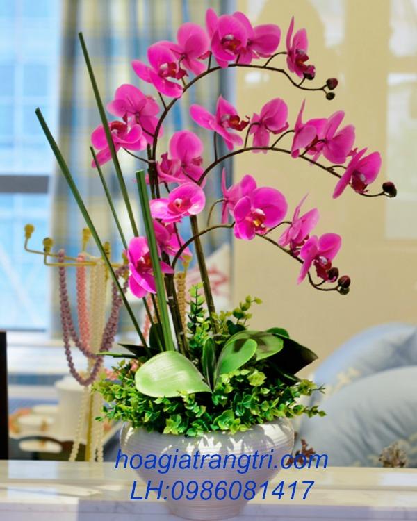 hoa lan cao su