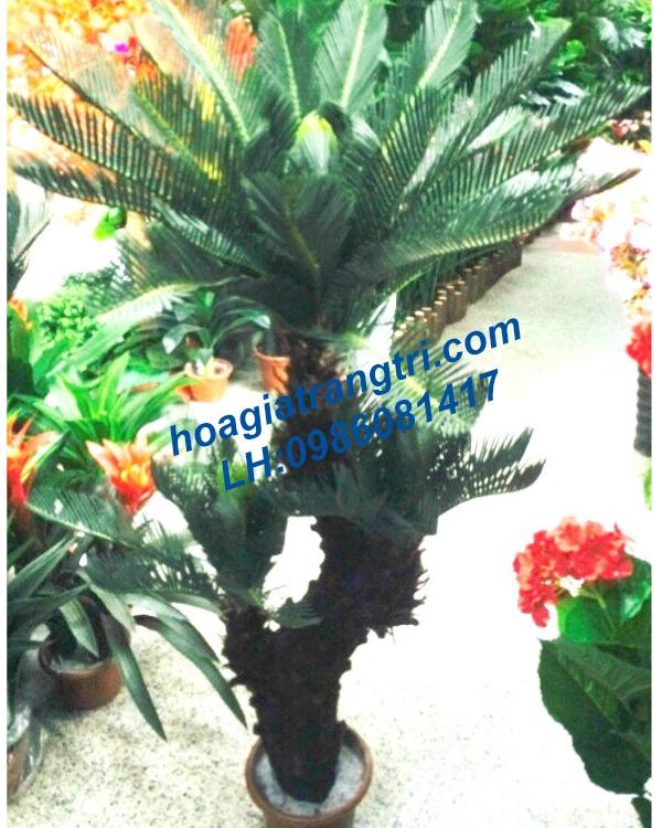 Mua cây giả ở Hà Nội - Cây vạn tuế