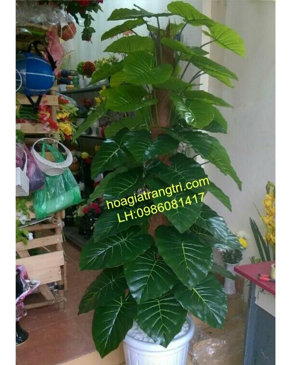 Cây bả chầu đẹp tại Hoa lụa Phương Thảo
