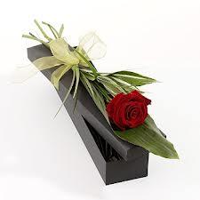 Only Rose _ Only You _ Hoa hồng Bất tử