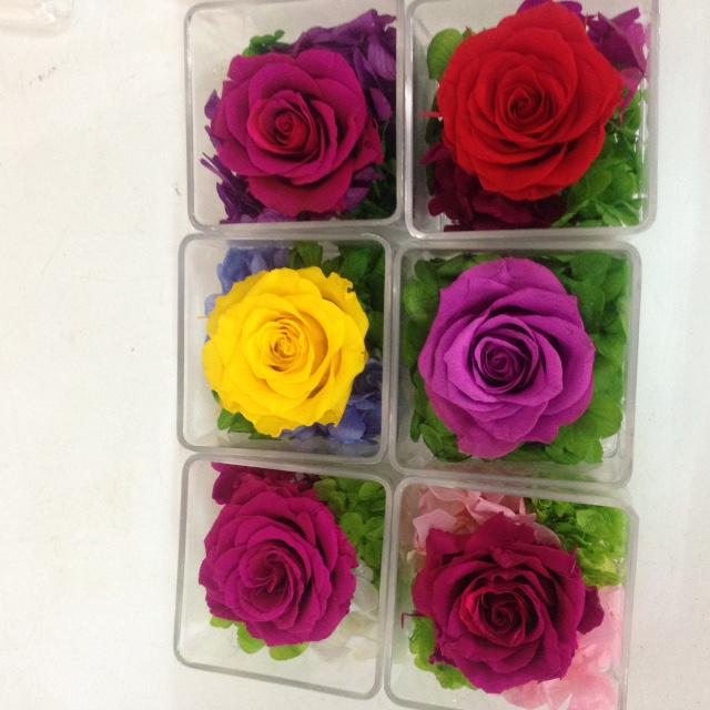 Hoa hồng vĩnh cửu quà tặng 20/10 với màu sắc độc dáo