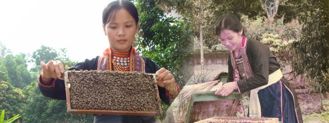 Kiểm tra đàn ong