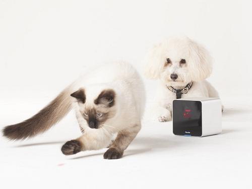 Petcube giúp trông chừng, nói chuyện và thậm chí đùa giỡn với thú cưng qua thiết bị di động.