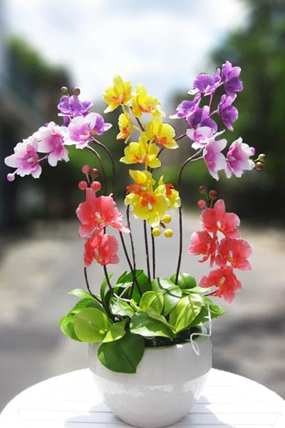 hoa lan bằng đất sét