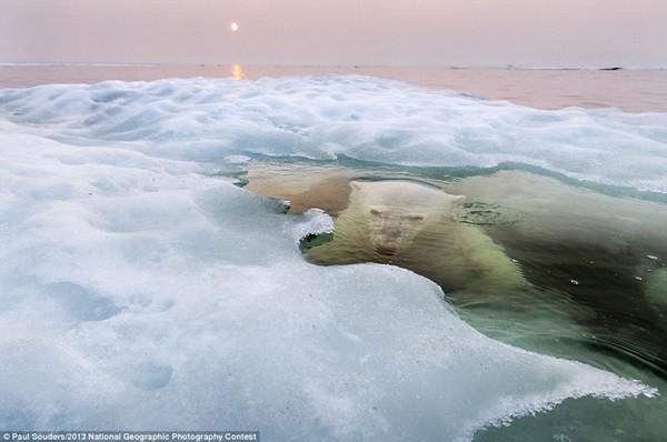 Những bức ảnh đoạt giải cao trong cuộc thi ảnh National Geographic 1
