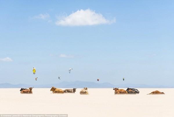 Những bức ảnh đoạt giải cao trong cuộc thi ảnh National Geographic 9