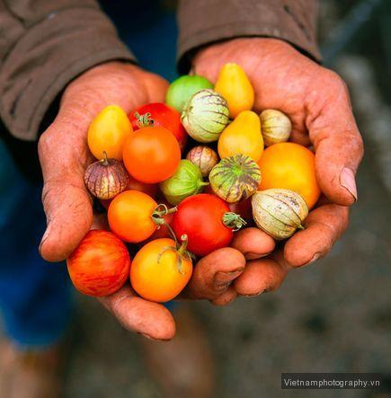 farmers-market-california-karnow_44189_600x450 Mẹo chụp ảnh những nơi quen thuộc