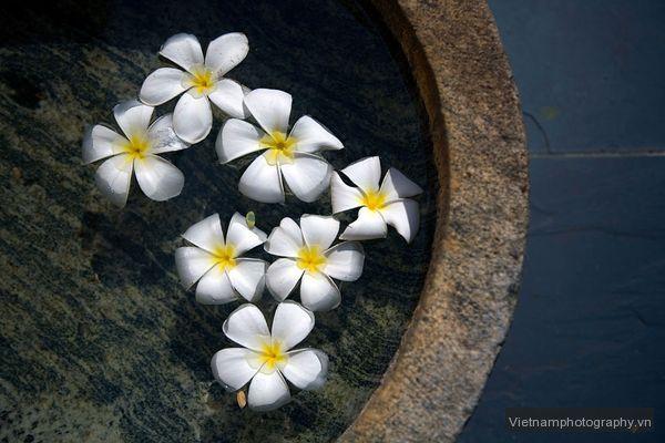 jasmine-flowers-bowl-evans_44193_600x450 Mẹo chụp ảnh những nơi quen thuộc