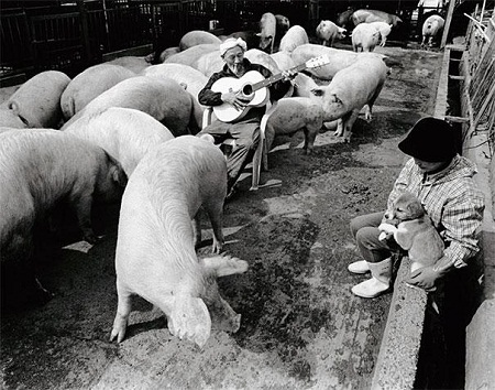 dân trí, nhật, gây sốt, thế giới, hạnh phúc, bộ ảnh ấn tượng, thú cưng, lợn