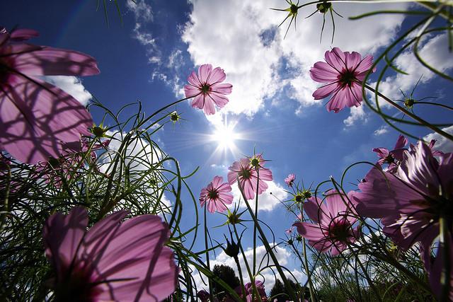 Cách chụp ảnh dưới ánh nắng mặt trời