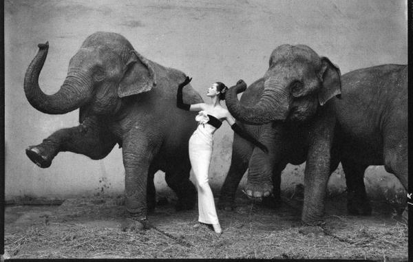 Nhiếp ảnh gia Richard Avedon - bậc thầy khơi dậy những cảm xúc giấu kín 3