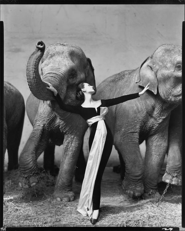 Nhiếp ảnh gia Richard Avedon - bậc thầy khơi dậy những cảm xúc giấu kín 4