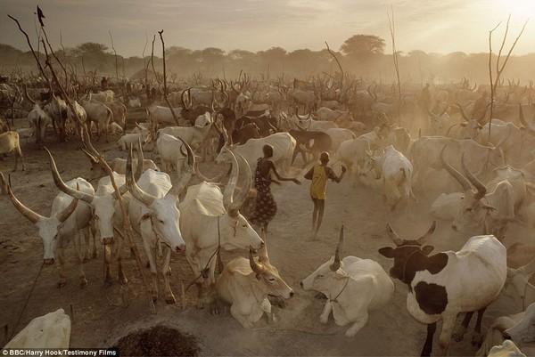 Bức tranh đời sống chân thực của các bộ tộc du mục châu Phi 1