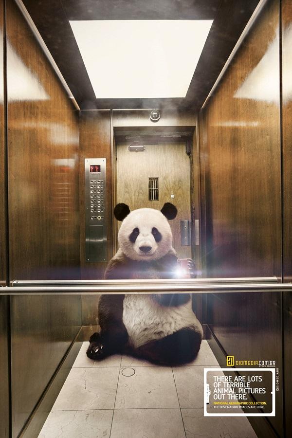 """Các poster """"kêu cứu"""" động vật hoang dã khiến bạn giật mình"""