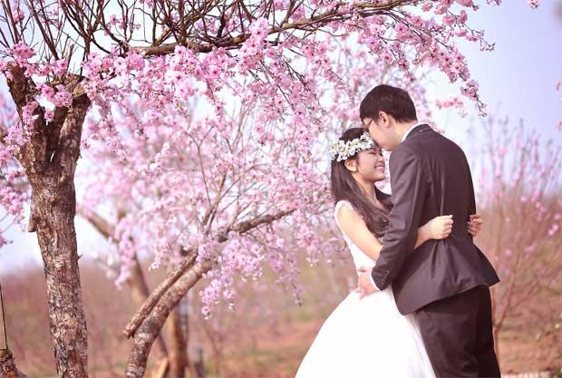 vuon hoa phuong linh 1 20 địa điểm chụp ảnh cưới hot nhất năm 2014