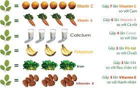 Kết quả hình ảnh cho hàm lượng dinh dưỡng chùm ngây