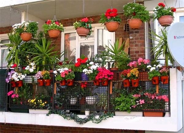 Vườn hoa nơi ban công
