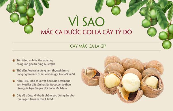 ly-do-mac-ca-duoc-coi-la-cay-ty-do-1