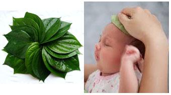 LÁ TRẦU KHÔNG - Công dụng thần kỳ của lá trầu với trẻ sơ sinh