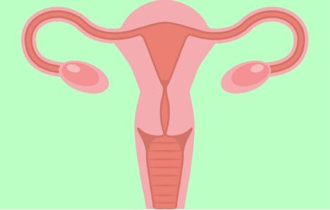 5 Sự Thật Thú Vị Mọi Phụ Nữ Nên Biết Về Buồng Trứng