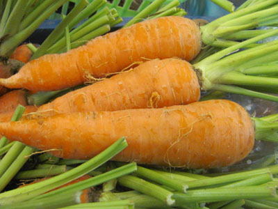 Cà rốt