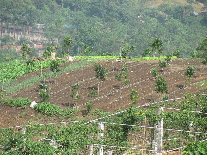 Cachs người dân phân biệt rau sạch trong thị trường bát nháo