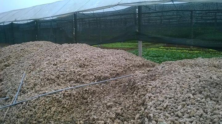 làm đất trồng rau hữu cơ 1