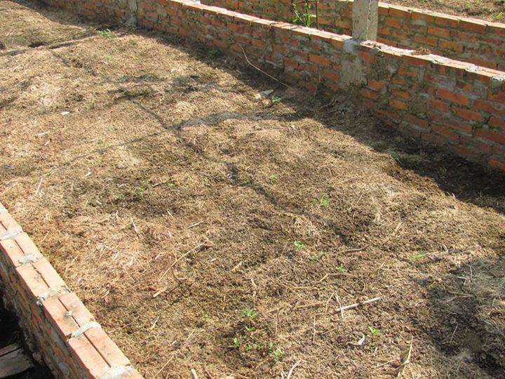 làm đất trồng rau hữu cơ 4
