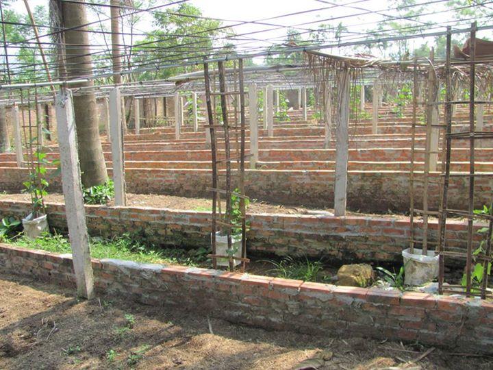 làm đất trồng rau hữu cơ 5